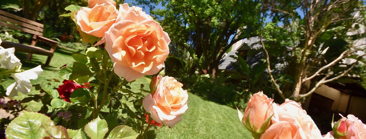 Open_Gardens_Alma_Garden_Centre_1