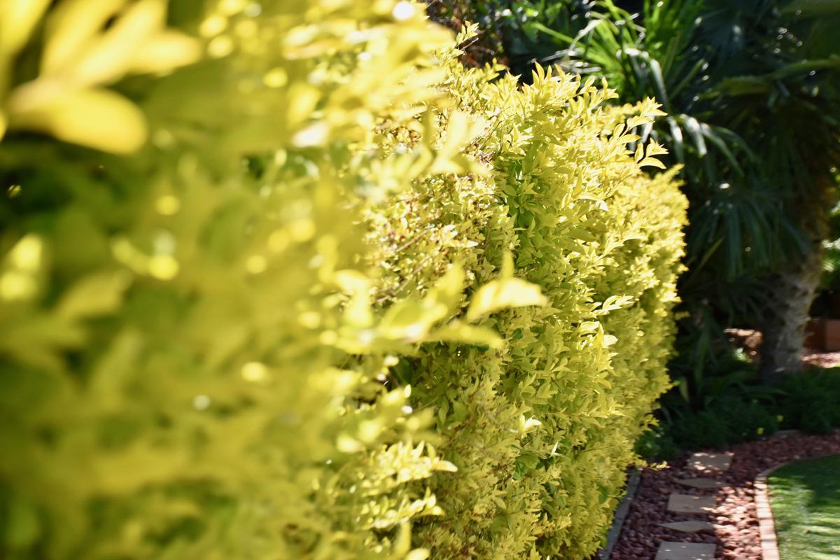 Open_Gardens_Alma_Garden_Centre_4