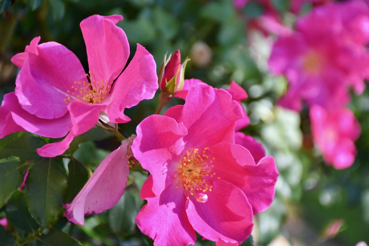 Open_Gardens_Alma_Garden_Centre_9